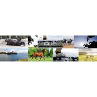 horse-banner-jpg (3).jpg