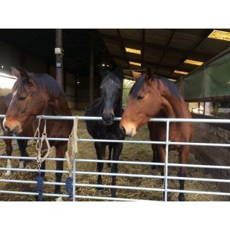 Ellie, Ebony & Bella.JPG